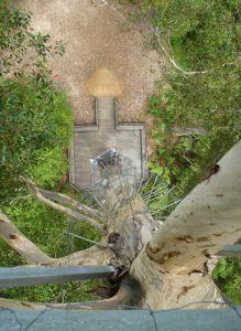 Gloucester Tree von oben